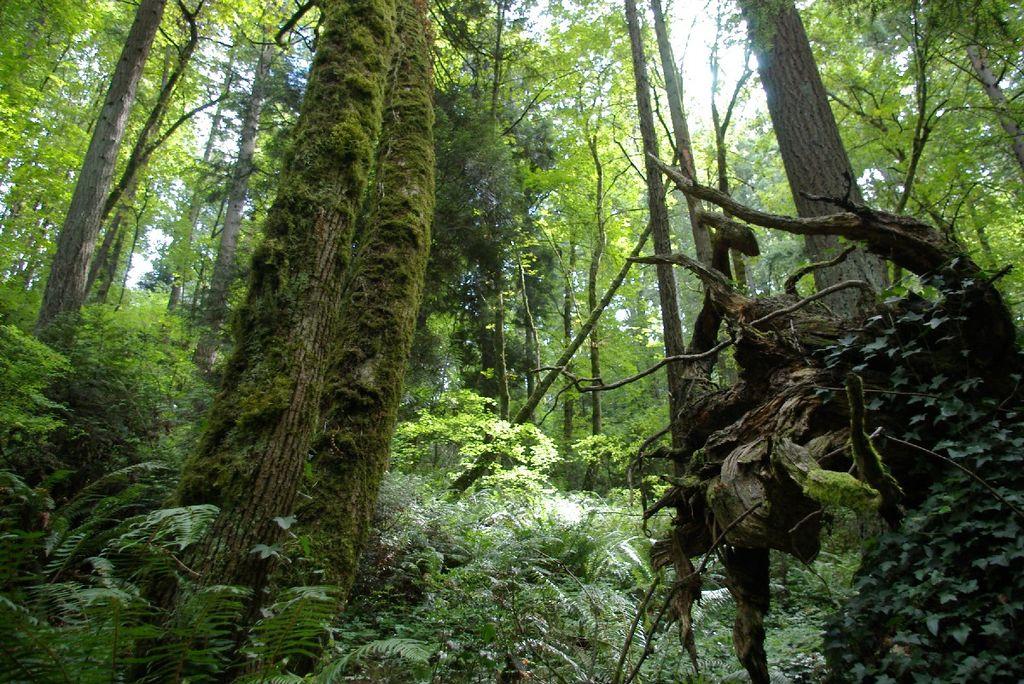 Marquam Nature Park in Portland, Oregon.
